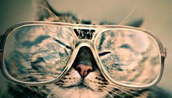 chistes de gatos
